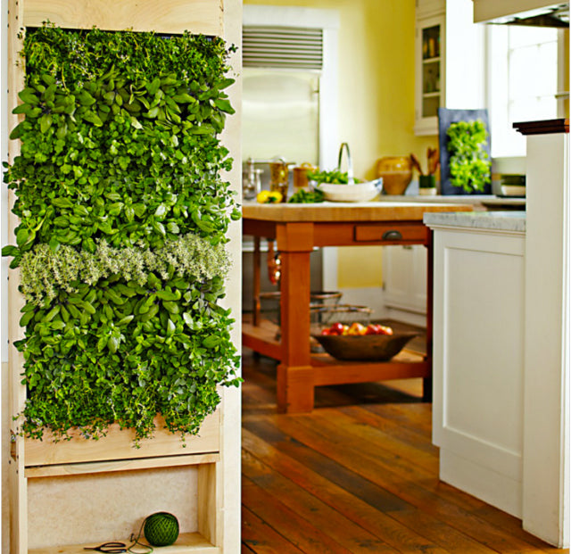 Photo copyright Williams Sonoma. This project, which can be found as one of several on the Williams Sonoma website, gives a great example of how you can grow your own food on your kitchen wall.