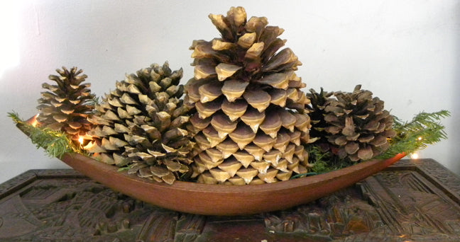 Pine Cones. Photo © Catherine Holliss