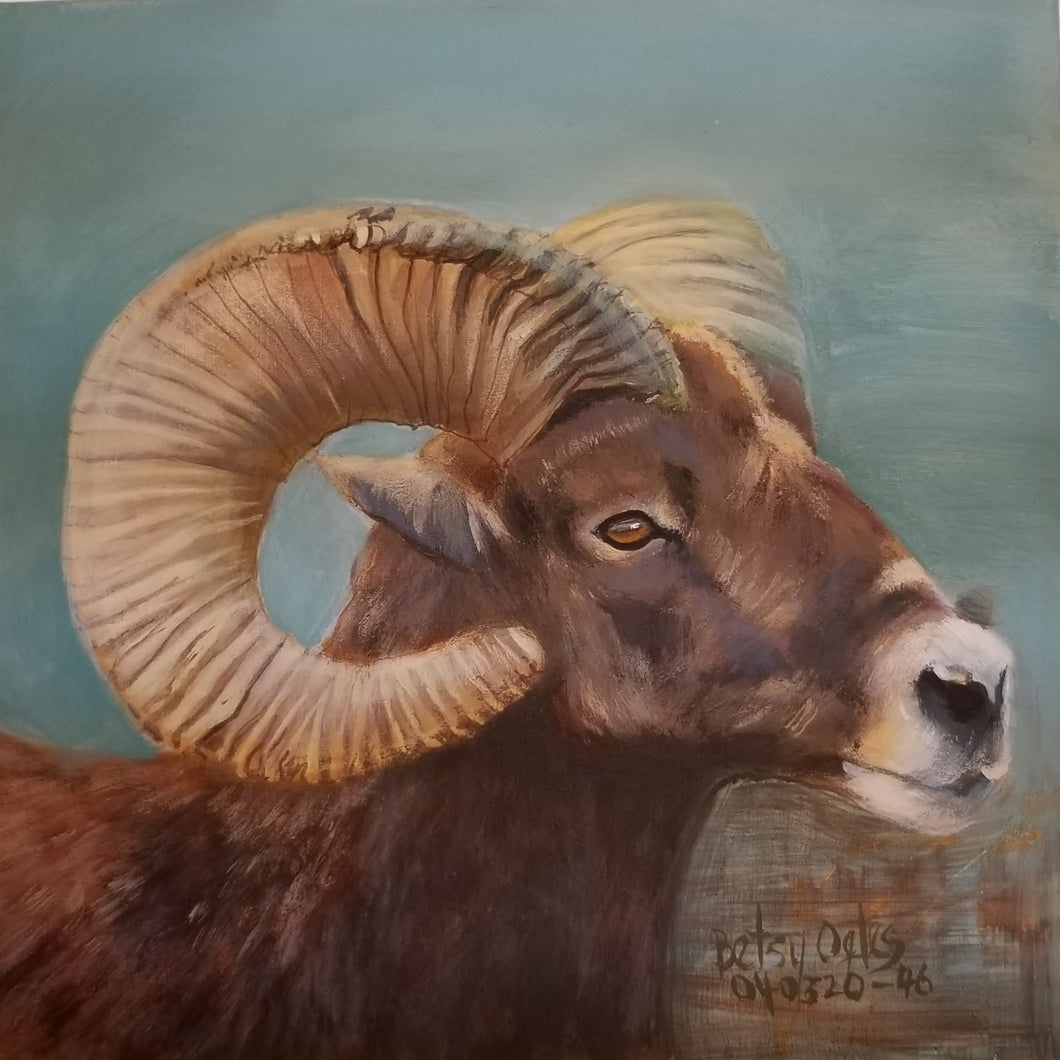 Long Horned Sheep