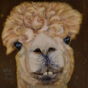 Llama With Curly Hair