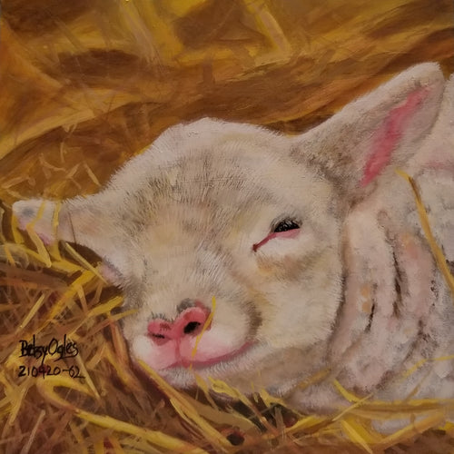 Lamb Napping in the Straw
