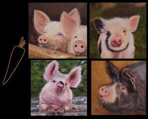 6 x 6 Post Card Style Note Cards with Envelopes- Set of 4     Pigs