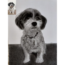 Load image into Gallery viewer, Charcoal Pet Portrait