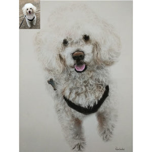Pencil Color Pet Portrait