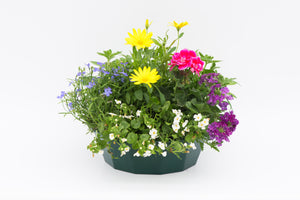 Speedy Planters - SAVE £9.98