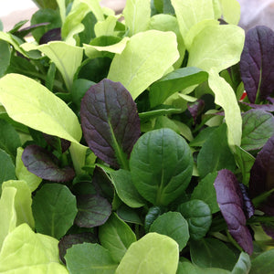 Pak Choi Colour Crunch Mix seeds