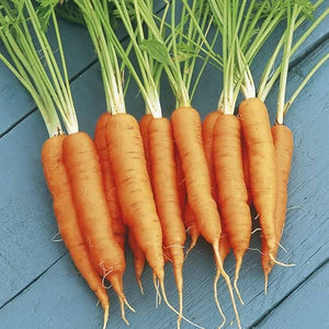 Carrot Seeds - Resistafly F1 Hybrid