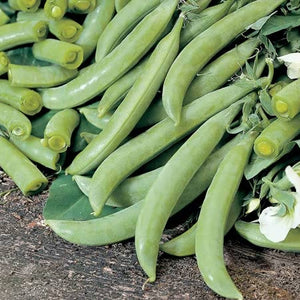 Sugar Snap Pea Seeds - Sugar Ann