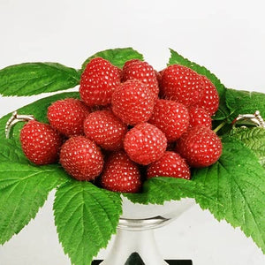 One of the best introductions in recent years. Late RASPBERRY Polka