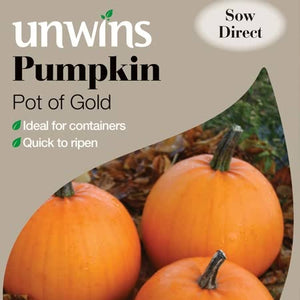 Pumpkin Seeds - Pot of Gold