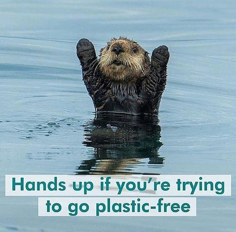 An otter half immersed in water holding its hands up. Text over image that reads 'put your hands up if you're trying to go plastic free'
