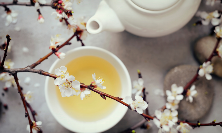 White tea in cup with cherry blossoms