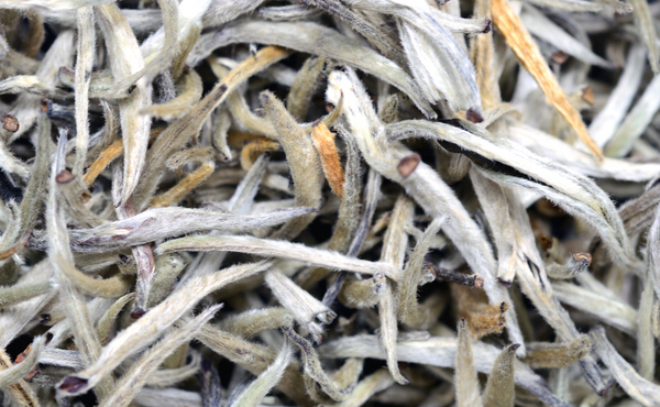 Silver needle loose leaf tea