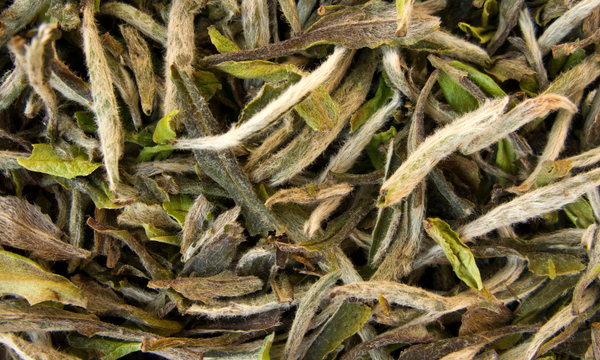 White Tea Dry Leaf Close Up