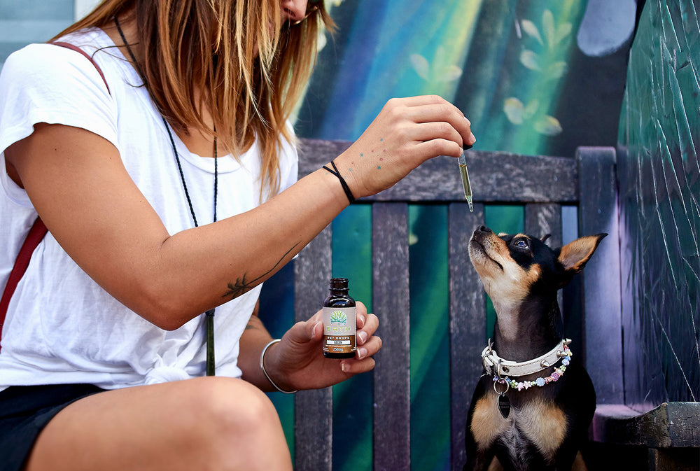 CBD oil pet drops