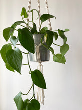 Load image into Gallery viewer, Macrame Plant Hanger