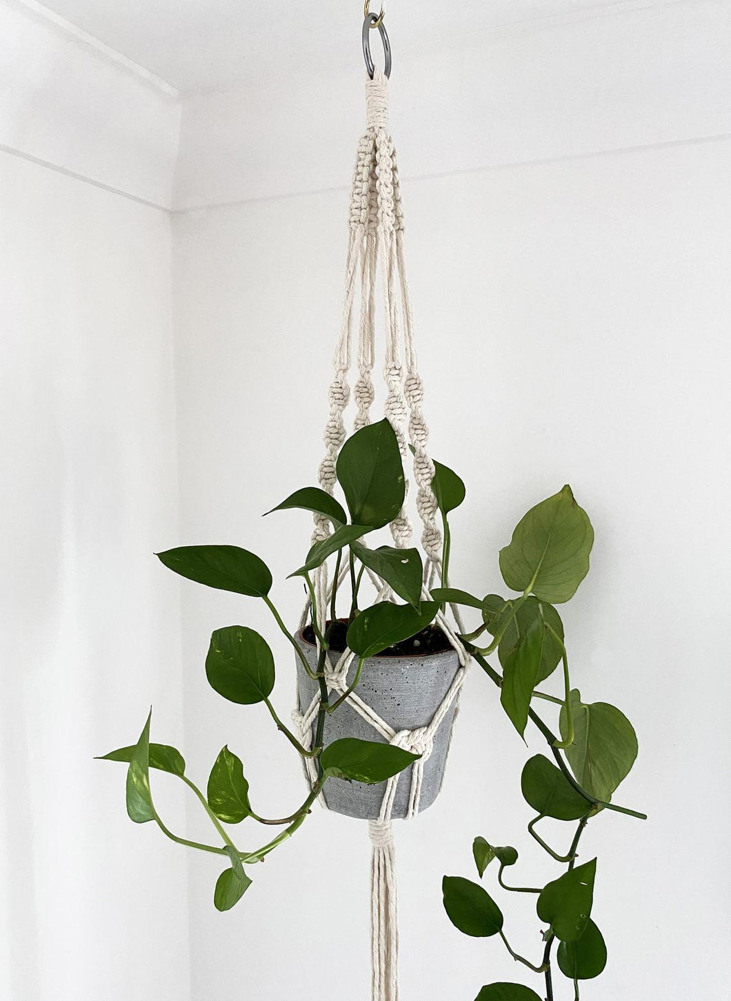 Natural Plant Hanger with Josephine Knots