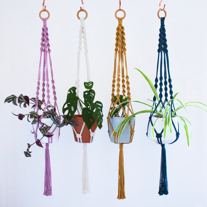 Plant Hanger - Assorted Colours