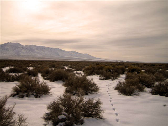 Nevada Land and Acreage For Sale