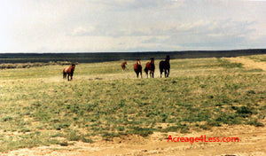 (SOLD) WYOMING 160 ACRES LOCATED IN STRATTON / RINER RANCH - $44,995 / $1,750 DOWN - ID# W11-229 -162