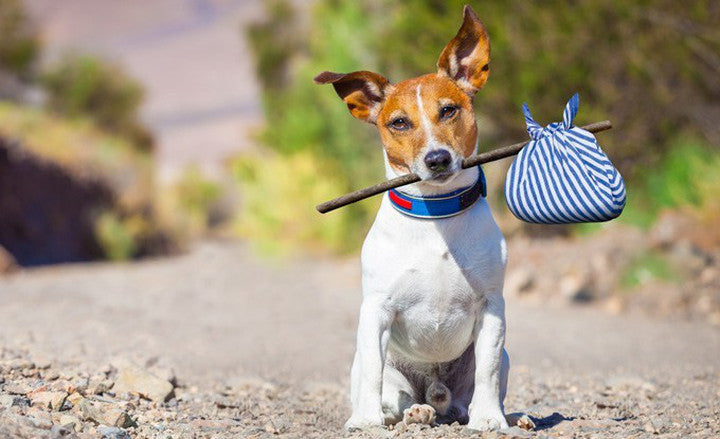 July - national lost pet prevention month