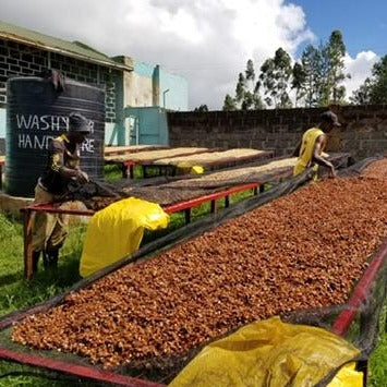 Kenyan Coffee Drying Beds