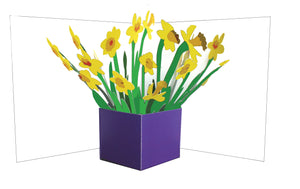 Pop up card - Daffodils