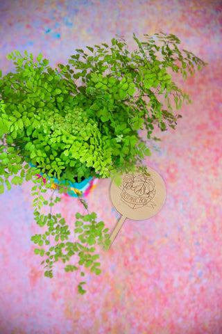 February Botanic Box Fern Indoor Plant Subscription