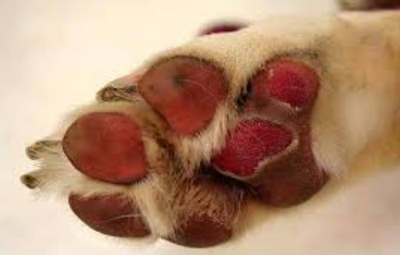 Hot Asphalt Awareness: How to avoid doggy paw burns in summer