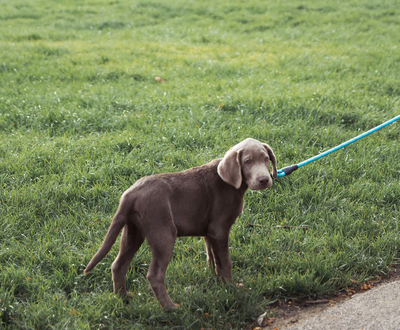 How To Stop Your Dog Pulling On Their Leash