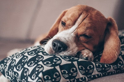 How Do I Know If My Dog Is Depressed?