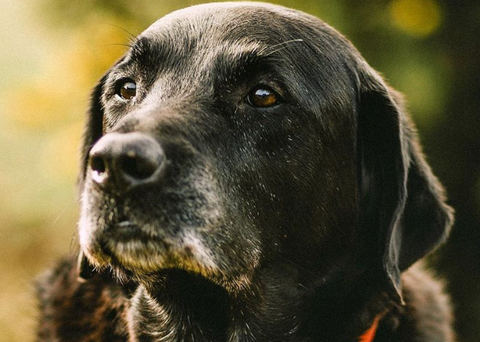 older dog health