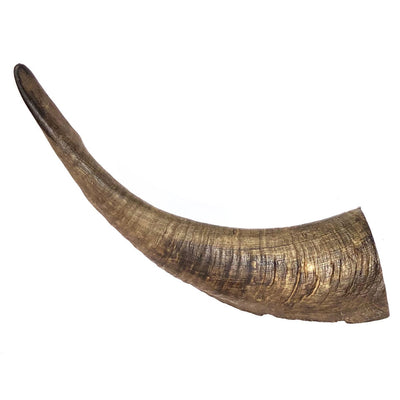 Whole Goat Horn