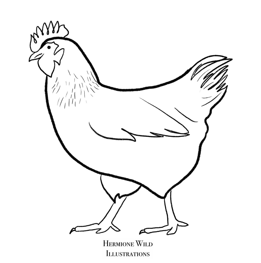 Chicken colouring sheet