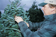 Load image into Gallery viewer, Real Christmas Trees Delivered 6 Foot Premium Balsam Fir Christmas Tree