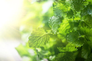 Vimergy Lemon Balm 115ml