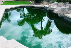 Maintenance Monday: When Should You Acid Wash Your Pool?