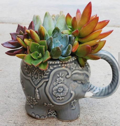 Succulent planter elephant unique holiday gifts