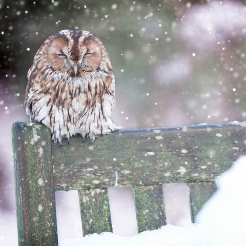 'Cosy Owl' - Pack of 10 Christmas cards