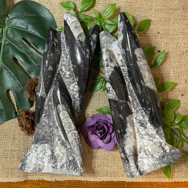 Orthoceras (Squid) Fossil Stand - 50% OFF!!!