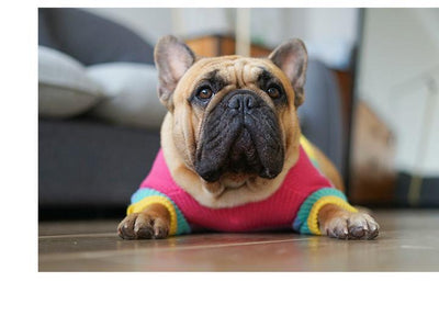 Rainbow Knitted Sweater Jumper Clothing for Dogs