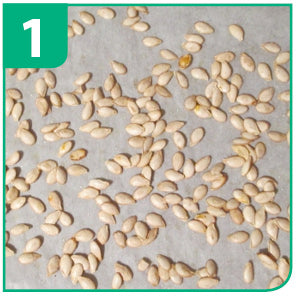 Seed Sowing Guide For Jiffy Pellets - Step 1