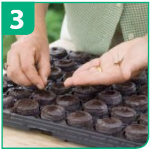 Seed Sowing Guide For Jiffy Pellets - Step 3