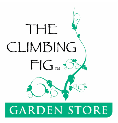 The Climbing Fig