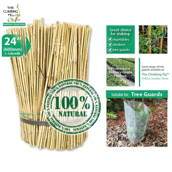 60cm Bamboo Stakes Natural 6-8mm Thick