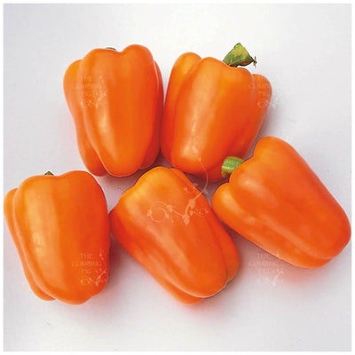 Capsicum Bell Orange Seeds