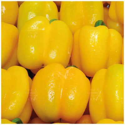 Capsicum Bell Yellow Seeds