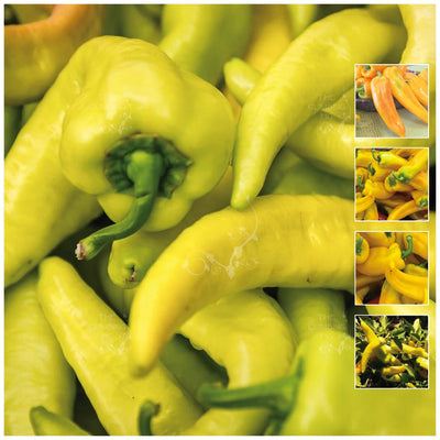 Capsicum Long Sweet Yellow Pepper Seeds