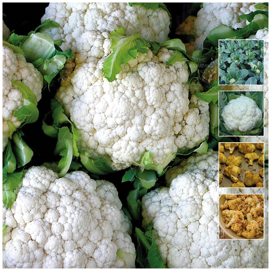 Cauliflower Year Round Delight Seeds
