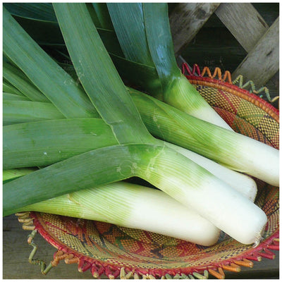 Leek Giant French Carentan Seeds